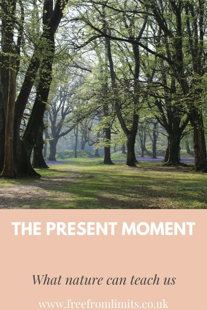 Finding peace in the present moment; lessons from nature.