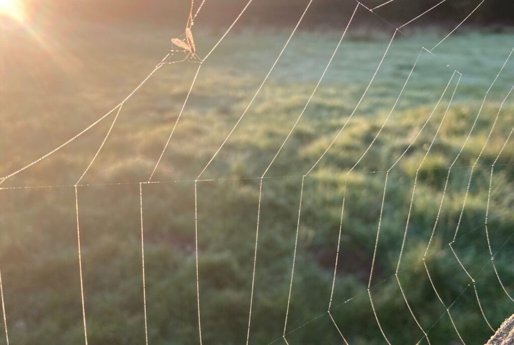 The spiders web of thought that can be so sticky it causes inactivity through self sabotage